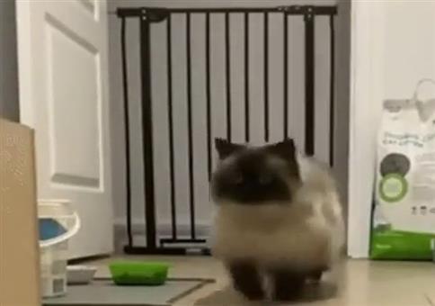 Wunderschöner Katzensprung