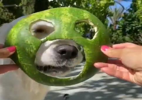 Hundi und seine Wassermelonenmaske