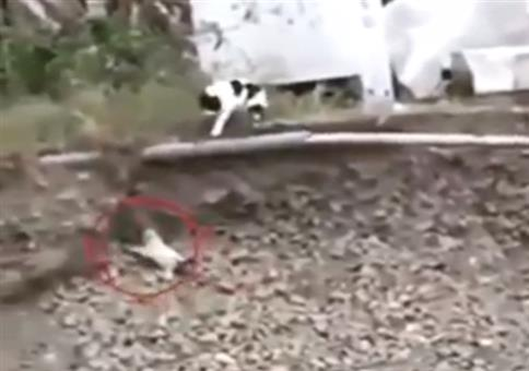 Katze rettet Hundewelpen