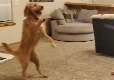 Gassi mit dem Hund