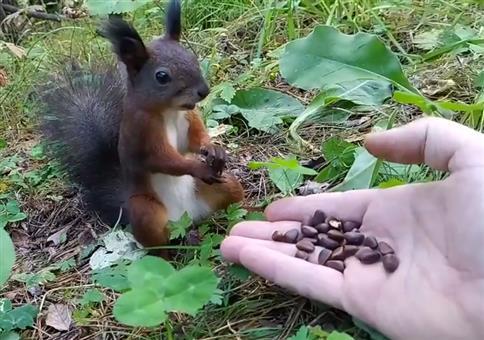 Eichhörnchen plötzlich eingefroren