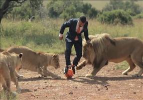 Fußball spielen mit wilden Löwen