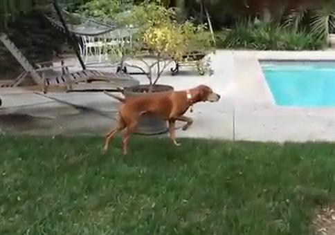 Krasser Glitch in der Hunde-Matrix
