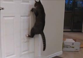 Diese Katze öffnet jede Tür