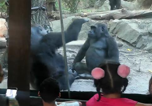 Liebe Affen im Zoo