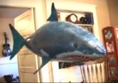 Air Swimmer - Fliegender Hai
