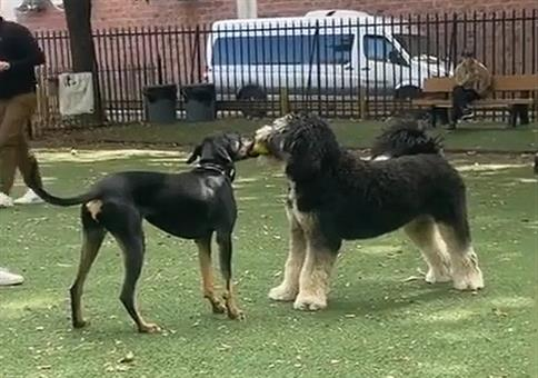 Wenn zwei sich streiten - Hunde Edition
