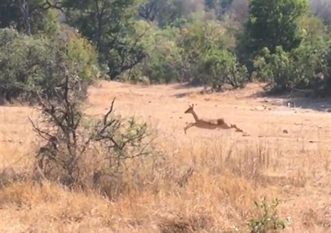 Ach wie schön die Antilopen da durch die Gegend springen