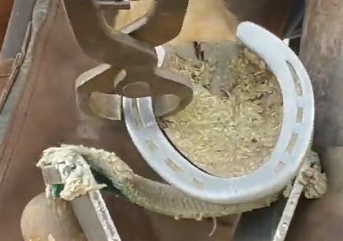 Beim Pferd das Hufeisen austauschen