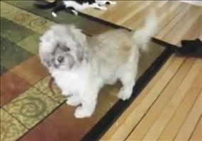 Merkwürdiges Hundegeschrei