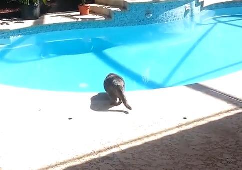 Schlechte Idee: Laut niesen wenn die Katze am Pool sitzt