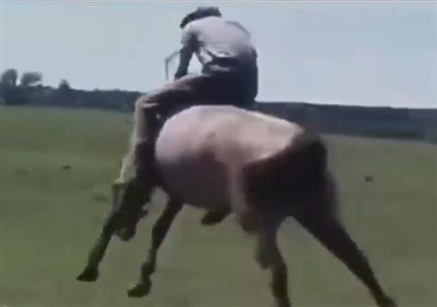 Rodeo auf wildem Pferd like a boss