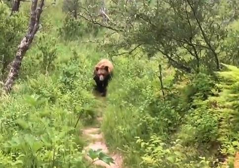 Hallo Bär!