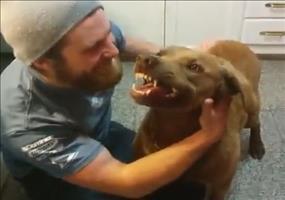 Fürchterlich klingender Hund