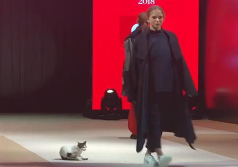 Katze auf dem Catwalk