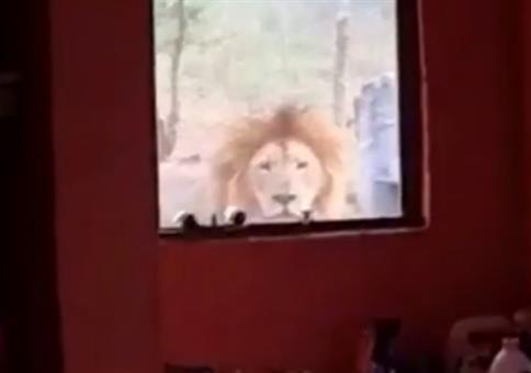 Da steht ein Löwe vor der Tür