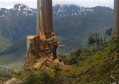 Wenn ein fallender Baum wie Chewbacca klingt