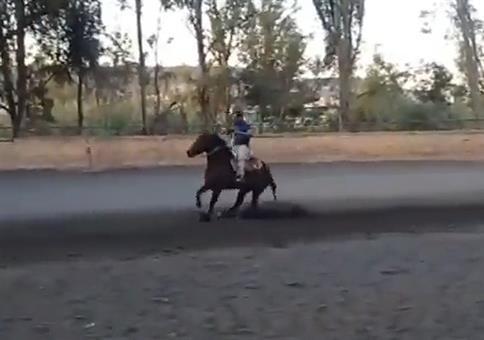 Vollbremsung auf Pferd