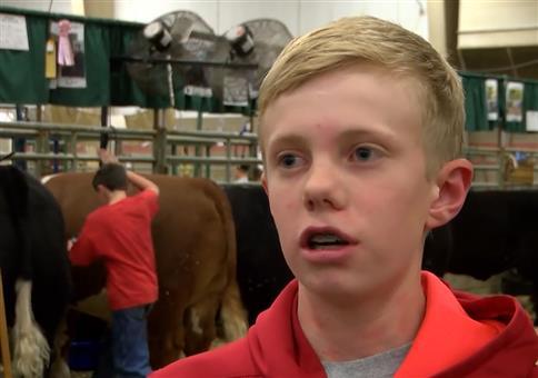 Wenn du die Kuh ärgerst, wirst du zurück geärgert