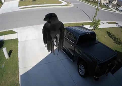 Vogel schwebt vor Überwachungskamera