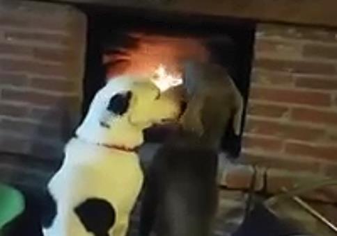 Zwei Hunde romantisch am Kaminfeuer