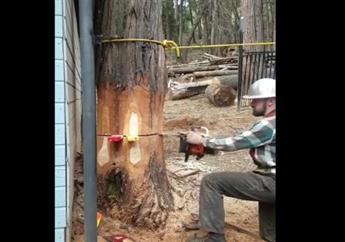 Präzises Baumfällen