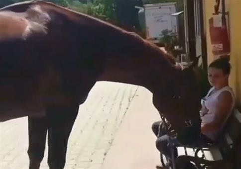 Das Pferd und die Bank
