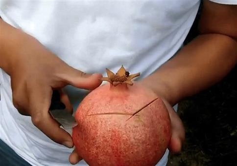 Einen Granatapfel richtig schälen und teilen