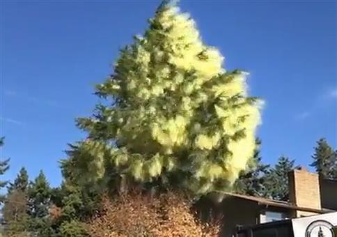 Baum fällen - Ein Fest für Allergiker