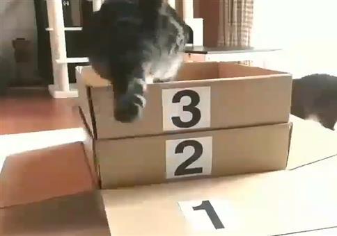 Katzelevel 10