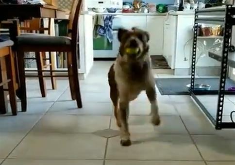 Hund tanzt mit Ball im Mund
