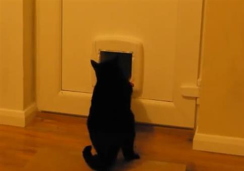Sie nimmt die Katzenklappe mit Gewalt