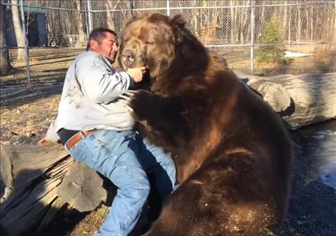 Wenn zwei Riesenbären kuscheln