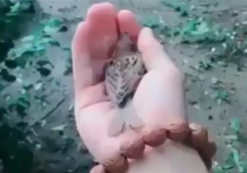 Der Vogel liebt die Hand