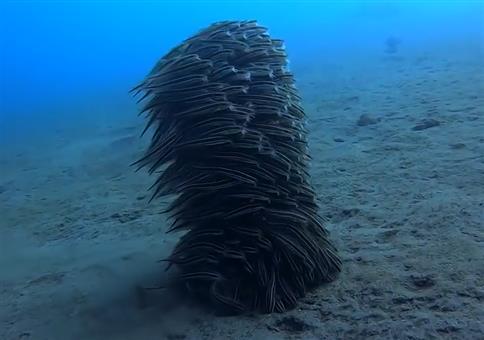 Fischschwarm hält zusammen