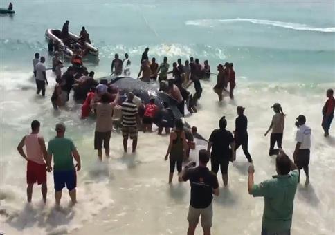 Strandbesucher retten gestrandeten Wal