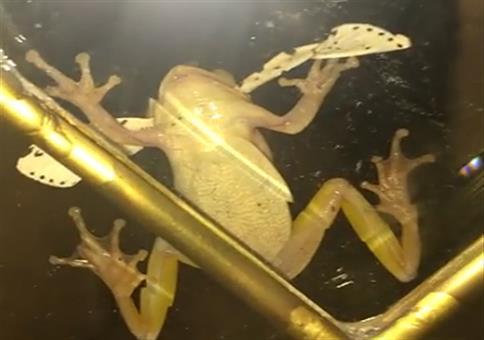 Frosch frisst Insekt