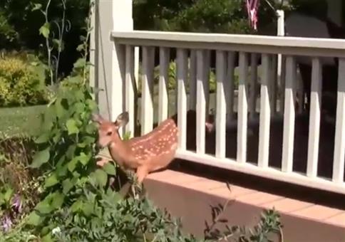 Bambi steckt fest
