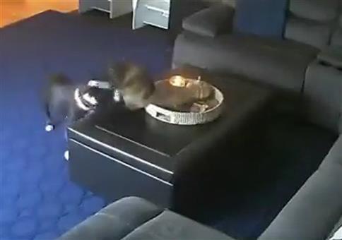 Katzenschwanz brennt