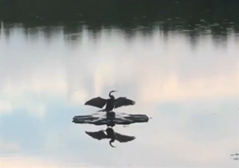 Dieser Vogel genießt die Ruhe