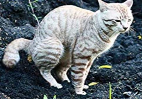 Kackende Katzen
