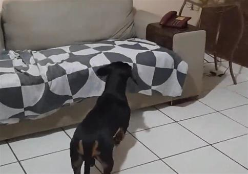 Dieser Hund wehrt Werbeanrufe zuverlässig ab