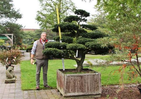 Japanischer Garten Bonsai für schlappe 7900 Euro