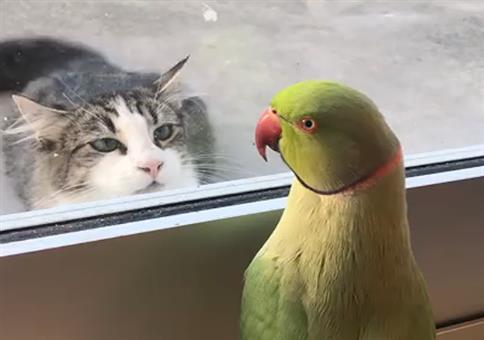 Papagei trollt die Katze