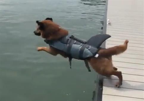 Hundehai springt ins Wasser