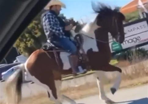 Pferd am tanzen