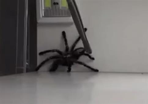 Behutsam die Spinne einfangen