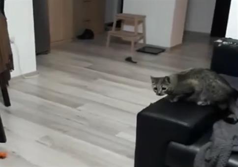 Katze wehrt alles ab