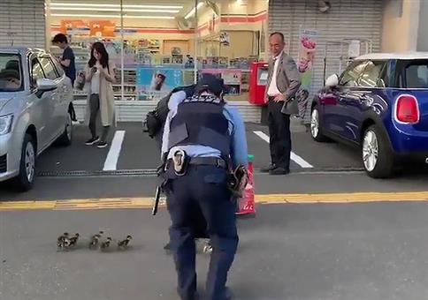 Spezielles Entenleitsystem der Polizei
