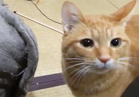 Katze fordert zum Spielen auf